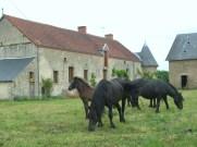 gite&chevaux